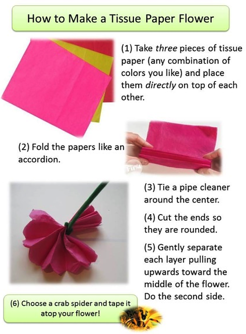 Tissue paper flower hebets lab fc3f780f8be0d05e3d4202bdca23f8a2af68d6 procedure participants can follow the instructions on how to make their own tissue paper flower mightylinksfo